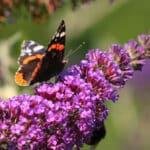Un été breton dans un jardin fleuri