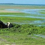 Le problème des algues vertes en Bretagne