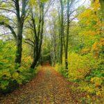 Filière forêt-bois en Bretagne : quel avenir dans 10 à 15 ans ?