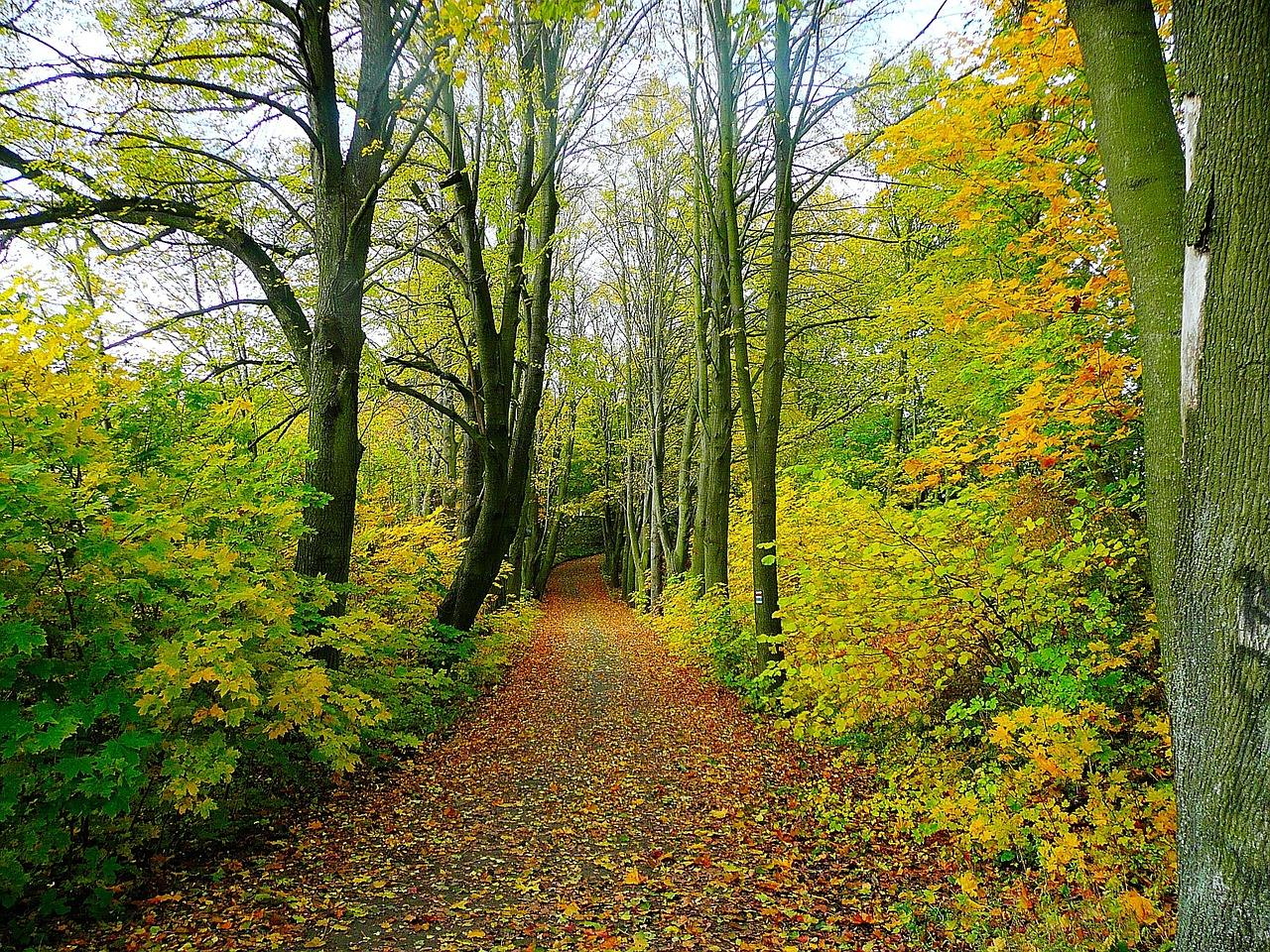 forêt bretonne