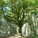 10 activités à faire en famille en Bretagne
