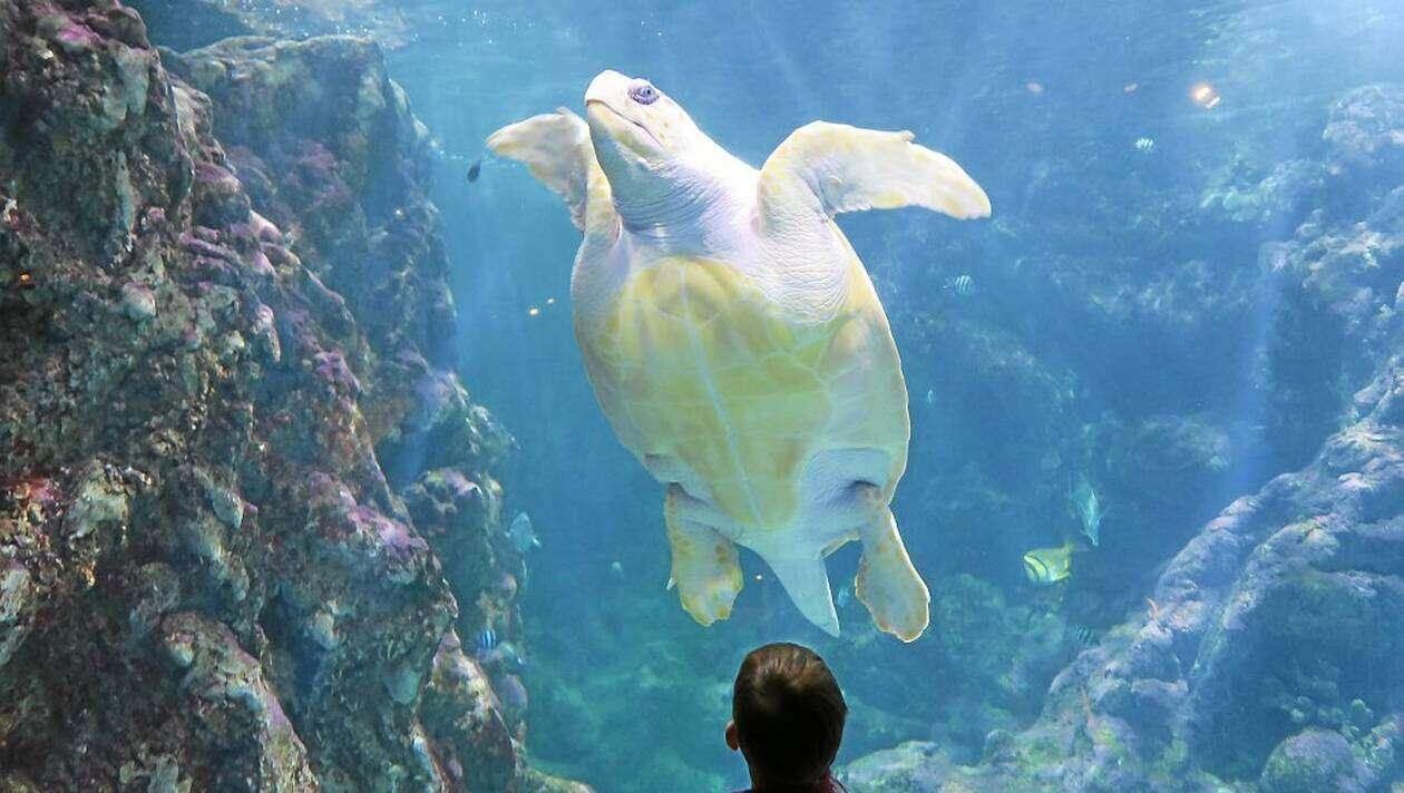 Une tortue de l'aquarium