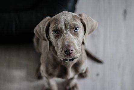 Adopter un chien : les refuges en Bretagne