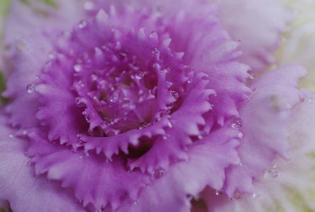 La Rose Eternelle Cristal pour un cadeau parfait
