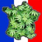 Comment puis-je obtenir du CBD en France?